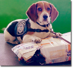America's first defense - a Homeland Security beagle.